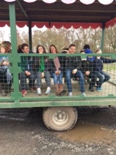 Farmer's Cart_7