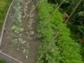 Walled Garden - after (1)