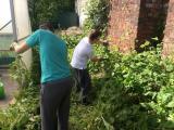 Walled Garden - before (2)