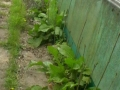 Walled Garden - before (1)