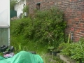 Walled Garden - before (8)